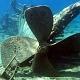 Usai Miras Kini Muncul Perpres Harta Karun Di Bawah Laut