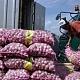 Siap-Siap 100 Ribu Ton Bawang Putih Masuk ke Indonesia